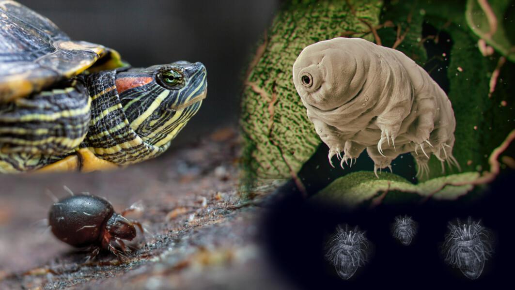 Naturen har gjort seg mer flid med visse arter enn andre.