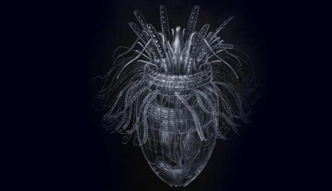 Korsettdyrene er oppkalt etter skjoldet som omgir kroppen.