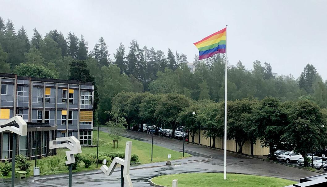 I dag starter Oslo Pride-festival og NIH heiser stolt flagget for å støtte markeringen av skeiv kjærlighet og mangfold.