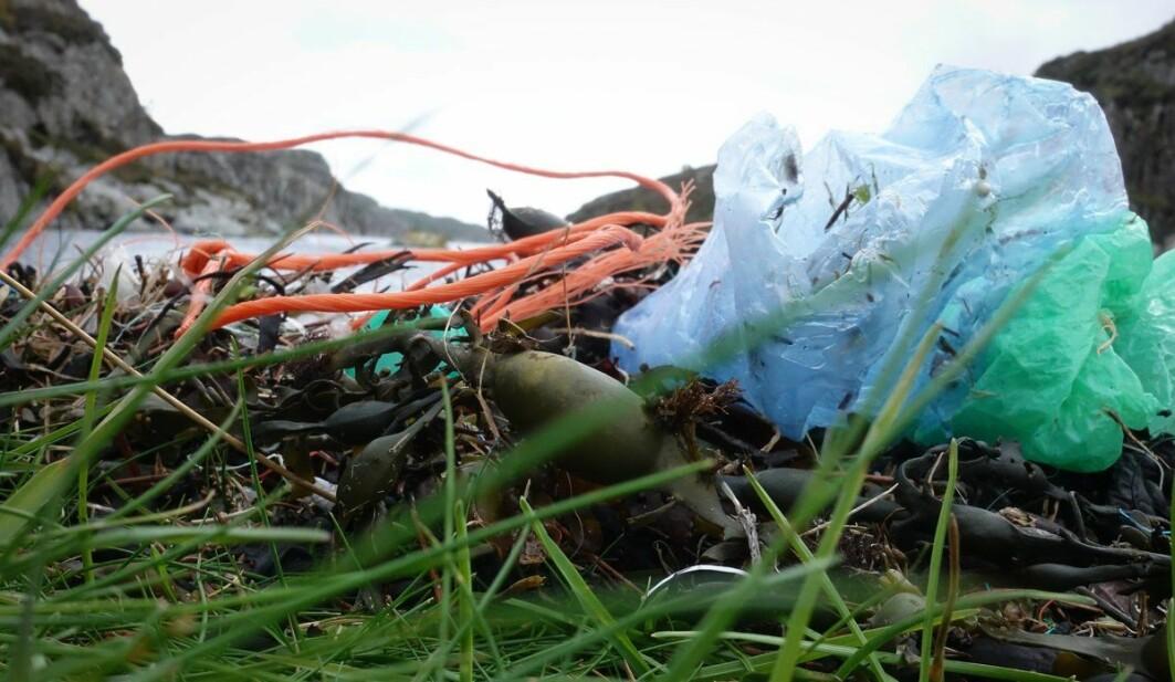 Her har taubiter og plastposer funnet veien til fjæresteiner på Sotra utenfor Bergen.