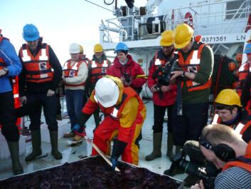 Anders Jelmert leter etter fisk blant ett tonn maneter. (Foto: Havforskninsgsinstituttet)