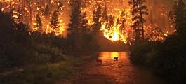 Vitenskapsakademiet: Klimaendringene øker faren for store skogbranner