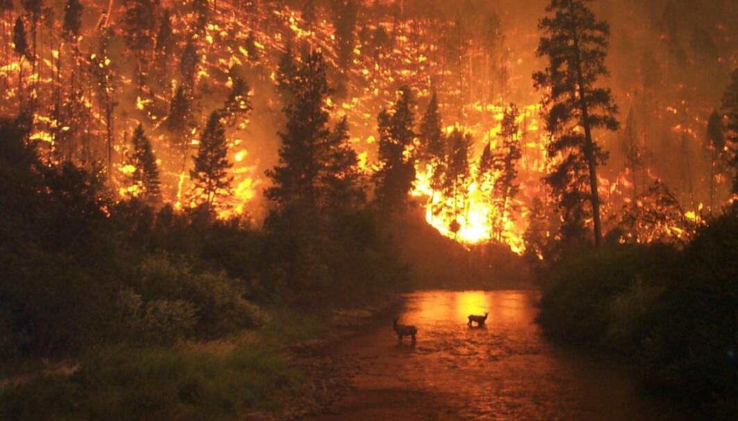 Global oppvarming og endringer i arealbruk øker risikoen for store vegetasjonsbranner, skriver Det Norske Videnskaps-Akademi.