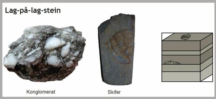 """Lag-på-lag-stein er de <span class="""" italic"""" data-lab-italic_desktop=""""italic"""">sedimentære bergartene</span>. De var opprinnelig partikler, sand, grus eller leire som har lagt seg lagvis på bunnen av et hav eller en innsjø før de har blitt presset og limt sammen."""