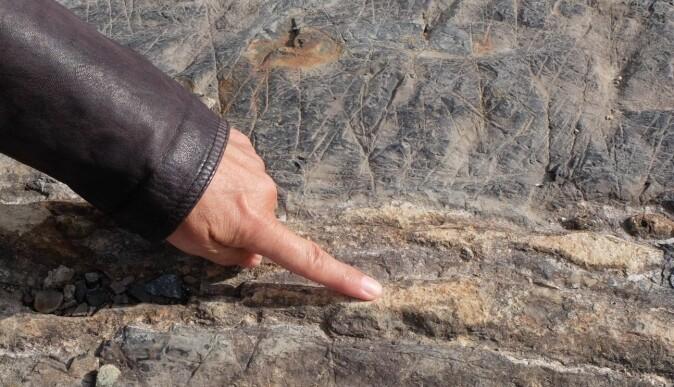 Dette var en lag-på-lag-stein som har blitt stripete på grunn av en prikkete stein. En sedimentær bergart har blitt brent av lava og forvandlet til en metamorf bergart.