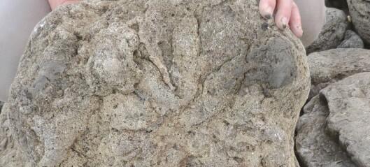 Gigantiske fotavtrykk avslører dinosaurenes siste vandring langs kysten av Storbritannia