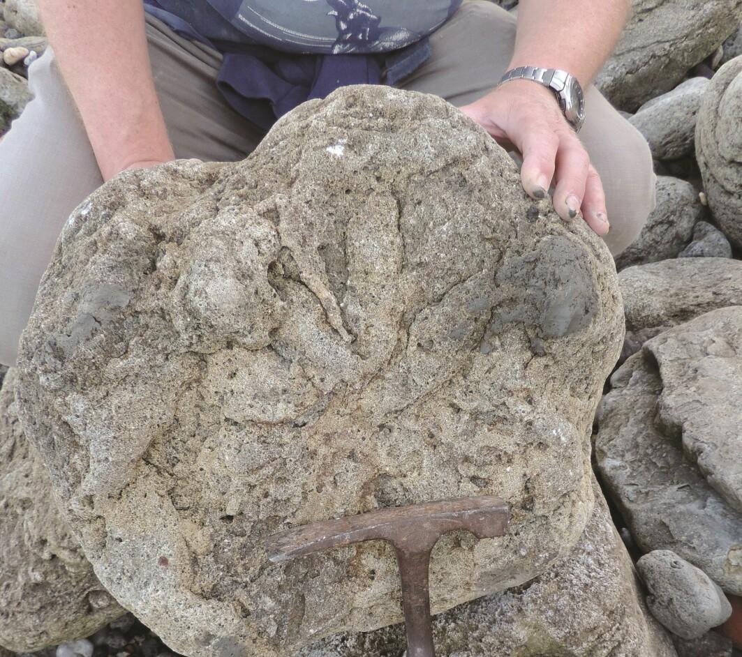 Et av fotavtrykkene som ble funnet, stammer fra en theropode-dinosaur. Forskerne antyder at det kan være fra en tidlig slektning av tyrannosaurus rex.