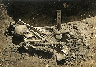 Verdens eldste haiangrep