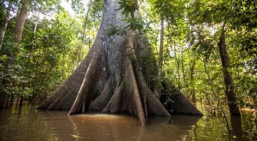 Amazonas' varierte skoger gjør det vanskelig å beregne karbonlagring nøyaktig