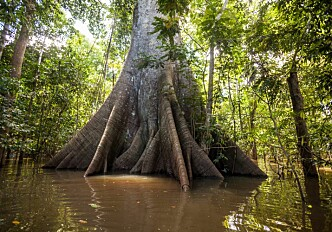 Large variations in forest diversity complicates carbon stock calculations in the Amazon
