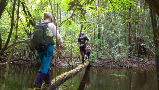 Crossing a stream: Walking in the rainforest.