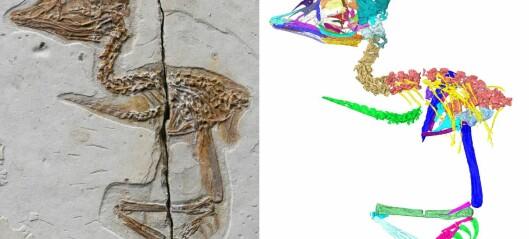 Denne lille fuglen lignet på en Tyrannosaurus rex