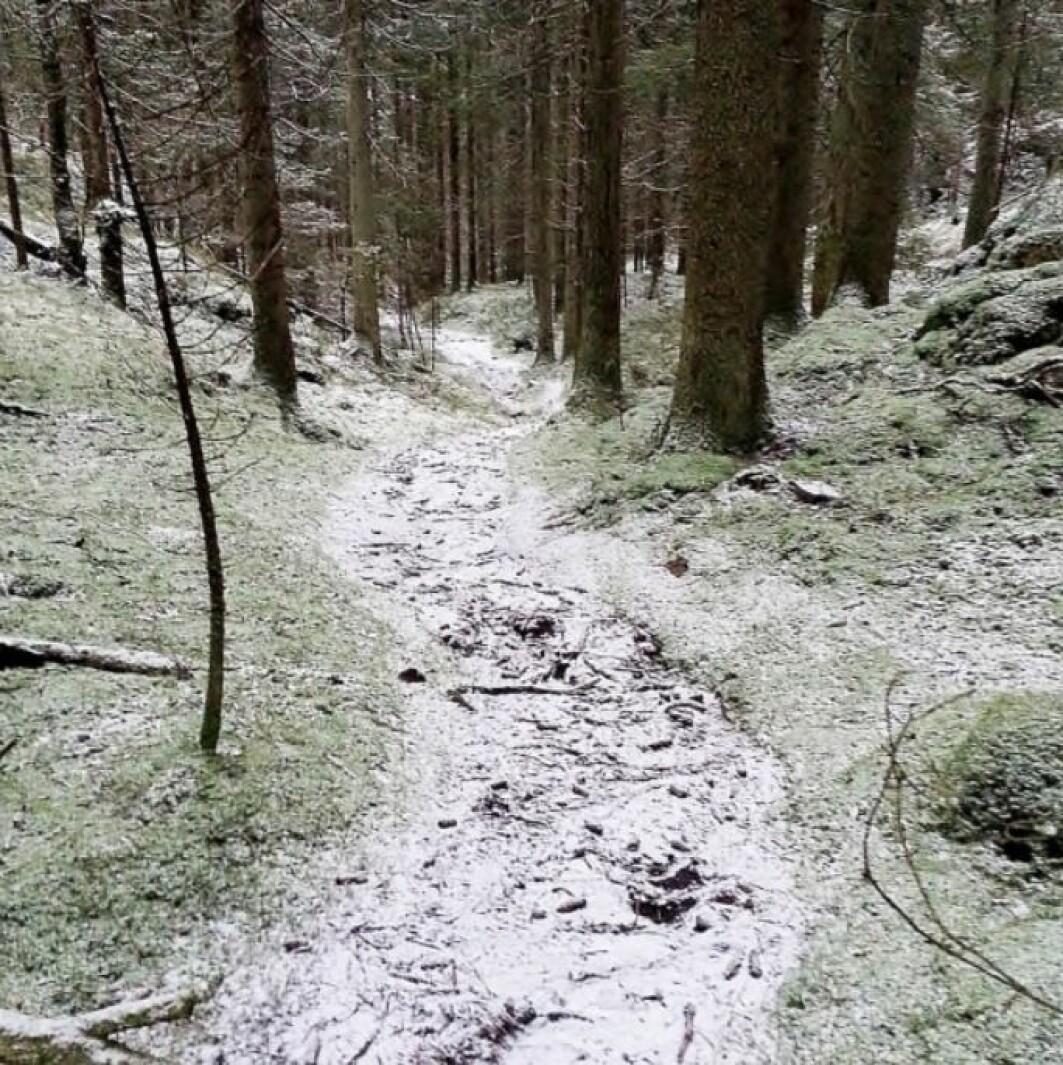 Sti på nordsiden av Årvollåsen. Her er veien mye brukt som tursti og synes tydelig i terrenget.