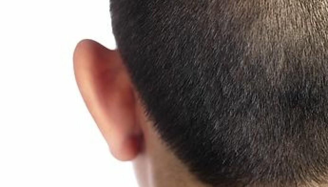 Alzheimerhjernen - en sliten hjerne?