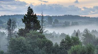 Russiske skoger vokser