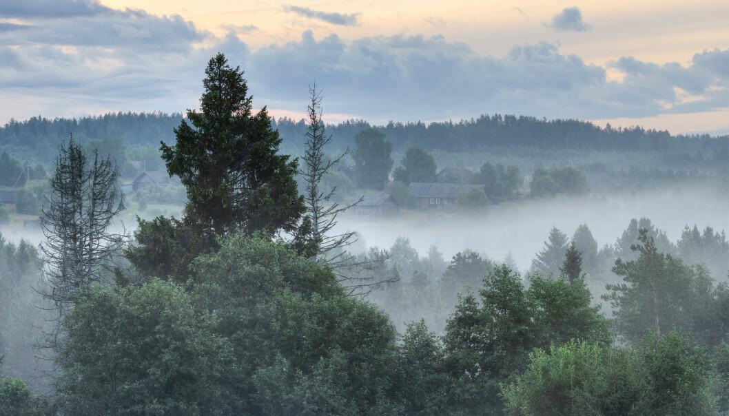 Russlands skoger vokser, ifølge en ny Nature-studie. Det står i kontrast til tallene den russiske staten selv har rapportert.