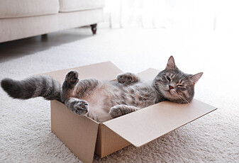 Har katter elsket koronatiden?