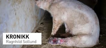 Dette er grunnene til at vi behandler noen dyr bra og andre så dårlig