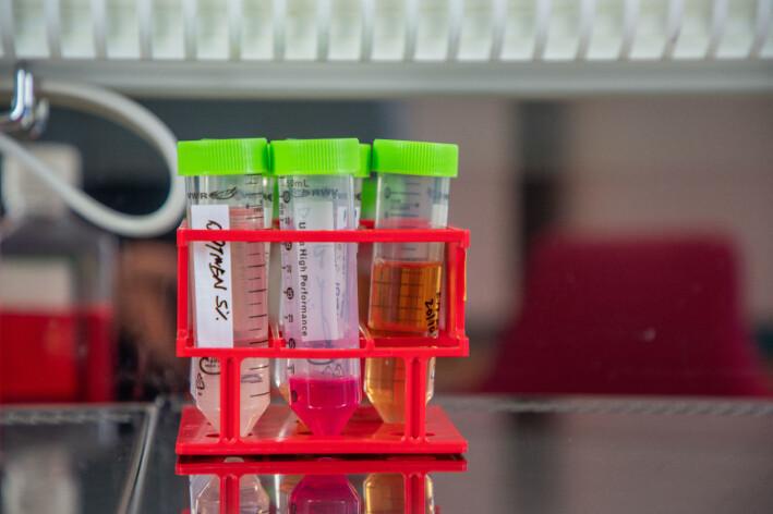Det er en lang prosess å lage nanostoffet som skal injiseres i musene. Her er et skritt på veien.