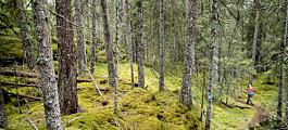 Norge er for dårlig på forbruk, klimagassutslipp og kunnskap om biologisk mangfold, ifølge Regjeringen