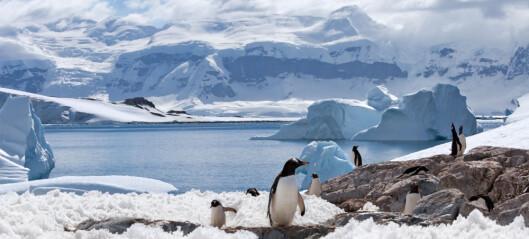 Det ble satt ny varmerekord i Antarktis i fjor