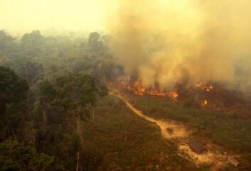 Brann i regnskogen i Amazonas. (Illustrasjonsfoto: iStockphoto)