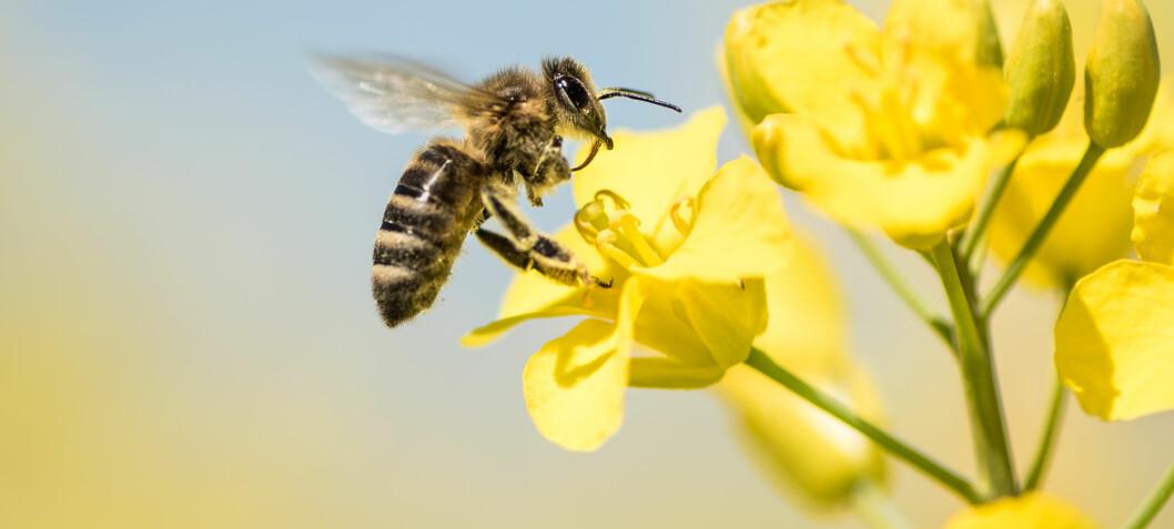 Jo flere typer blomster, jo flere bier får du på besøk