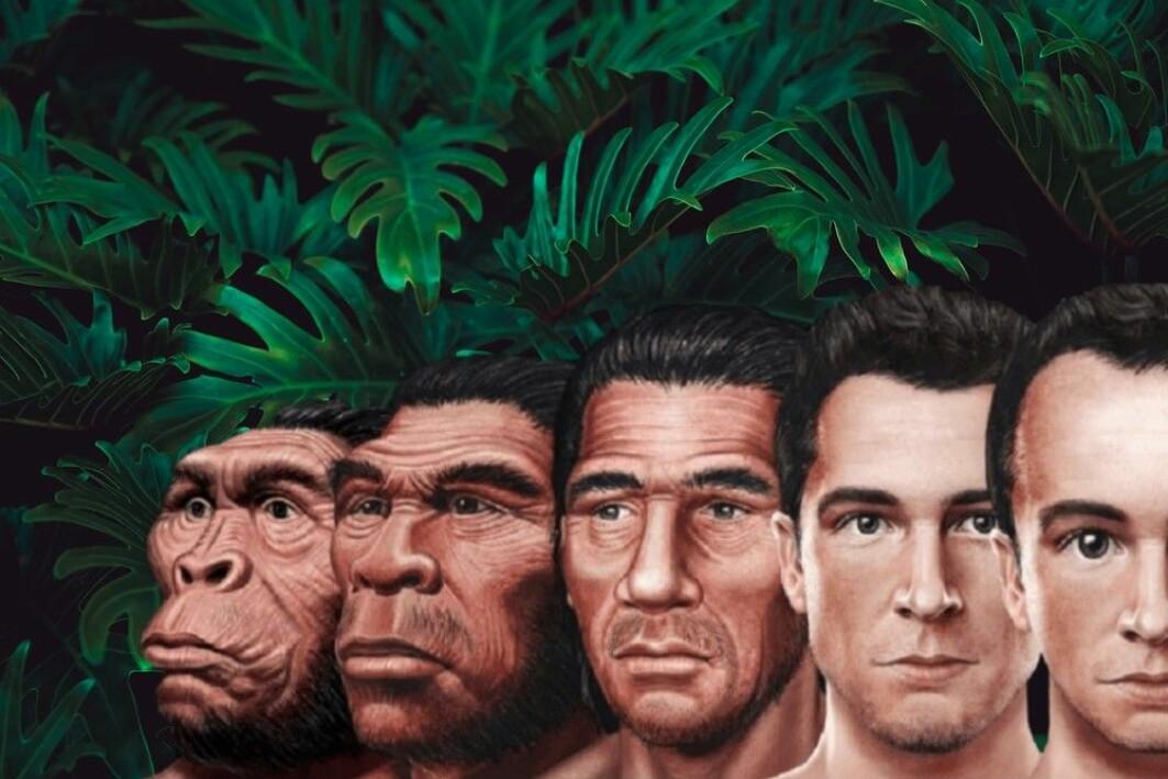 Egentlig er det feil å si at mennesket stammer fra apene. Vi har felles forfedre med de andre primatene, men de fortsetter selvfølgelig også med å utvikle seg, sier forsker Jesper Givskov Sørensen.