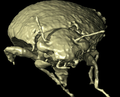 Forskere fant 230 millioner år gamle biller i en bæsj