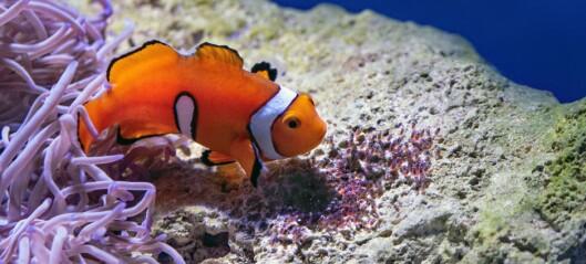 Noen babyfisker svømmer utrolig fort