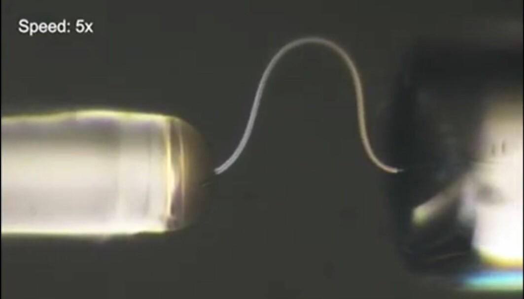 Dette er en liten, tynn tråd som er langt under en millimeter lang. Den er laget av en eneste iskrystall.