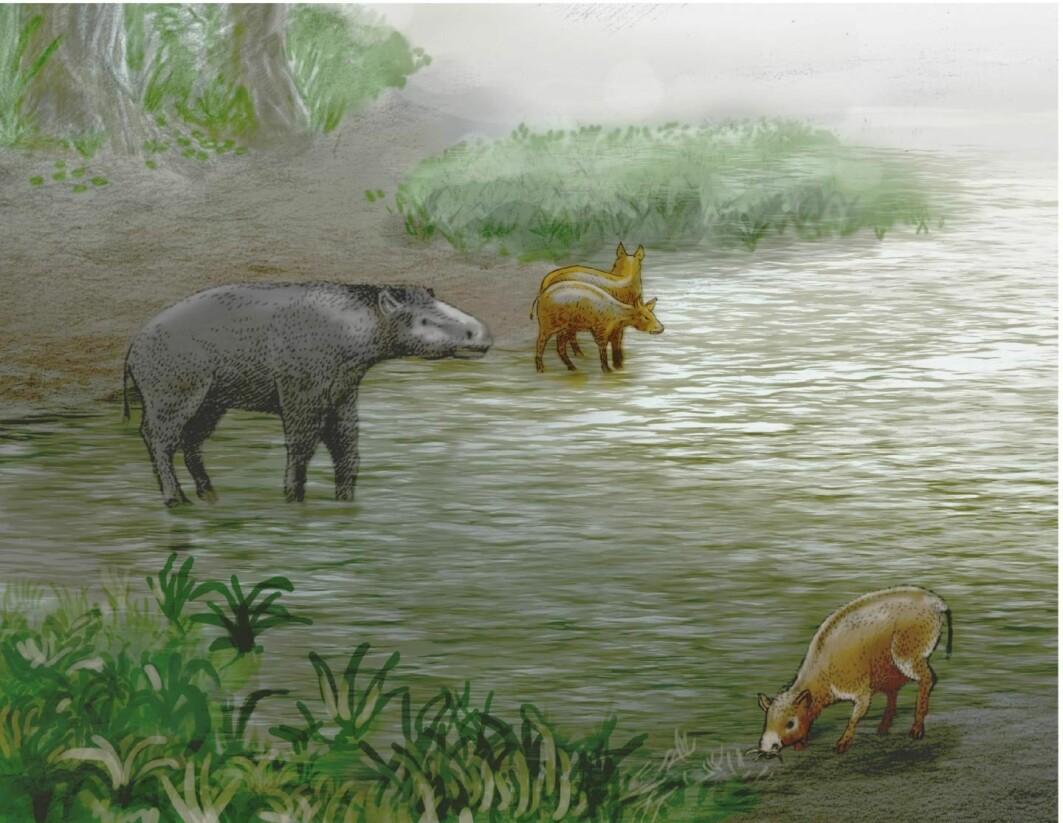 Hva er dette for noen dyr? De skal ha levd for 37 millioner år siden, og er i slekt med et dyr som lever i beste velgående i dag.