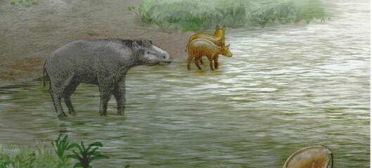 Ser du hvilket dyr disse ligner på?