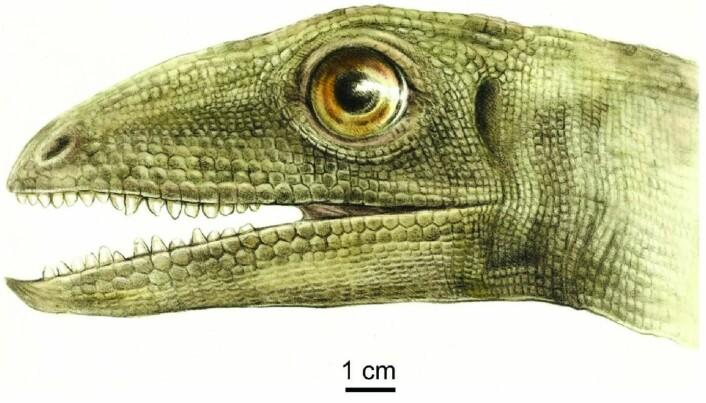 Slik så kanskje Silesaurus ut. Den spiste alt mulig, tror forskerne.
