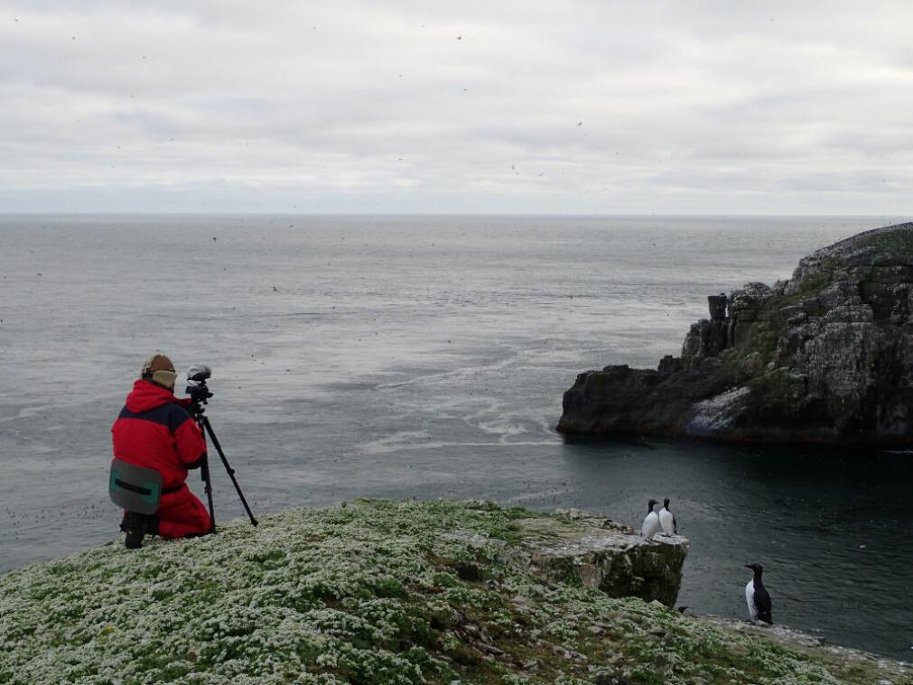 Bestanden av polarlomvi går tilbake på Svalbard og Bjørnøya. Sannsynligvis på grunn av dårlig overlevelse gjennom vinteren.