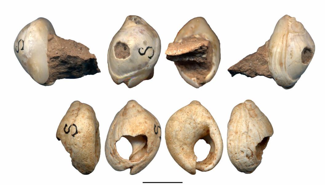"""""""Her ses to av skjellene - fra ulike vinkler - som forskerne har undersøkt i den nye studien. Disse skjellene ble funnet i Skhul i Israel. Målestokken er 1 cm."""""""