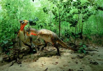 Fra utstillingen til Denver Museum of Nature & Science, USA. Her ses dinosaurer av arten Stygimoloch spinifer som slåss i et skogsområde i Nord-Dakota, i det som antas å være ett av de siste økosystemer i Kritt-tiden. (Foto: Denver Museum of Nature & Science)