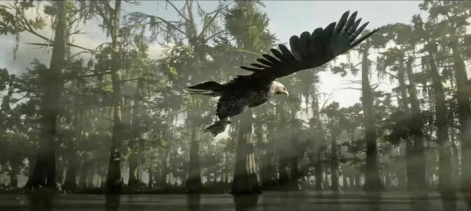 Rovfugl med bytte. De som har opplevd situasjonen på skjermen, kan kanskje fortelle hvilken fugl og hvilket bytte.