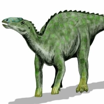 """Hadrosaur (Kilde: Arthur Weasley, Wikimedia Commons)"""