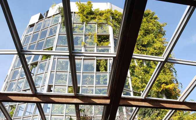 ) The greenhouse of the gene bank at the Institute of Botany, the National Academy of Sciences of Armenia. The windows were broken long ago, so there is nothing to stop the trees from taking over.