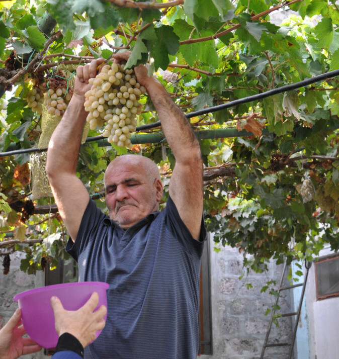 This farmer, Simon Jamalyan, explains that people in Armenia hold that their country is the original home of wine grapes. Indeed, Armenia boasts a great diversity of wine grape varieties. Here Jamalyan offers the Norwegian visitors a taste of his grapes.