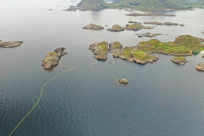 The catch and release site consists of nets used to guide the whales into a basin that can be sealed once entered.