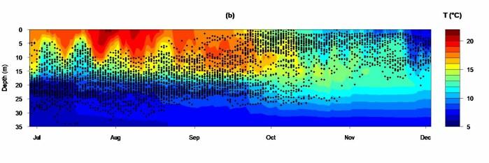 Gjennomsnittlig dybde brukt av torsk merket med akustikksendere (sorte prikker) i Tvedestrandfjorden. Torsk unngår vanntemperatur over 16 °C.