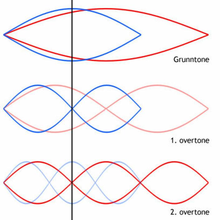 """""""Øverst: Hunnmyggen har en dypere grunntone (rød) enn den mindre hannen (blå). Myggene samstemmer grunntonene slik at andreharmoniske overtone hos hannen (midten, blå) har samme bølgelengde, og dermed tonehøyde, som tredjeharmoniske overtone hos hunnen (nederst, rød)."""""""