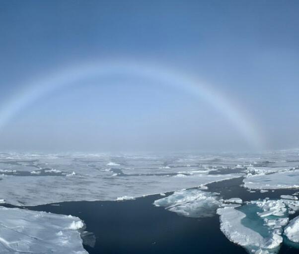 Arvestoff i Arktis