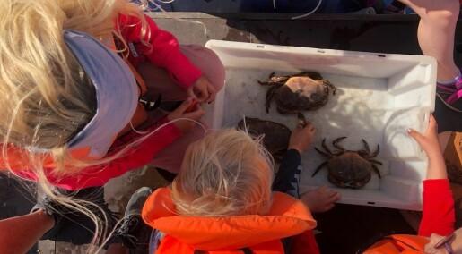 Hvor lenge kan krabber ligge i en bøtte med vann?