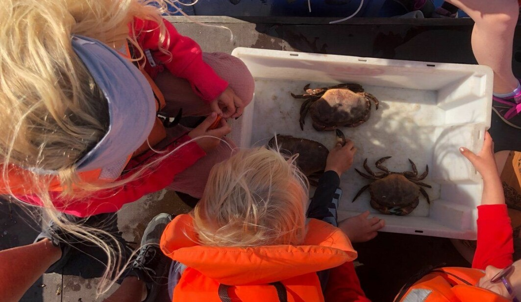 Barna i Bergstø barnehage er ofte ute i båt og lærer om livet i havet.