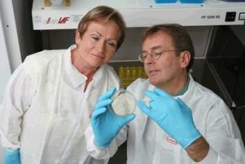 Janine Berg og Askild Holck studerer hvordan viruset bakteriofag tar knekken på Listeria