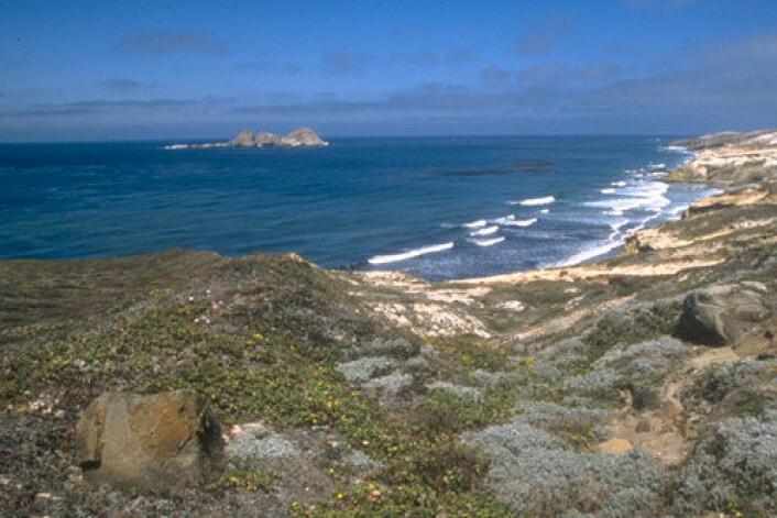 På Channel Islands utenfor kysten av California, USA, har forskere funnet spor av et 12 000 år gammelt fiskevær. Bilde fra San Miguel Island. (Foto: National Park Service/U.S. Department of the Interior)