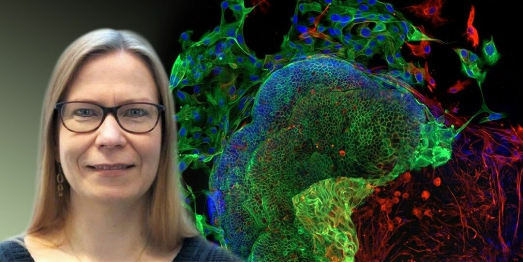 Kaisa Lehti has lead the effort to understand more about why chemotherapy sometimes doesn't work.